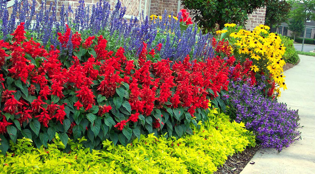 Annual perennial accent artisan landscape designs llc annuals and perennials mightylinksfo